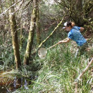 Trying to catch a California Red-legged Frog