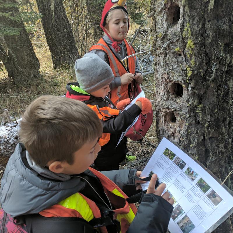 Students examining woodpecker holes in a tree