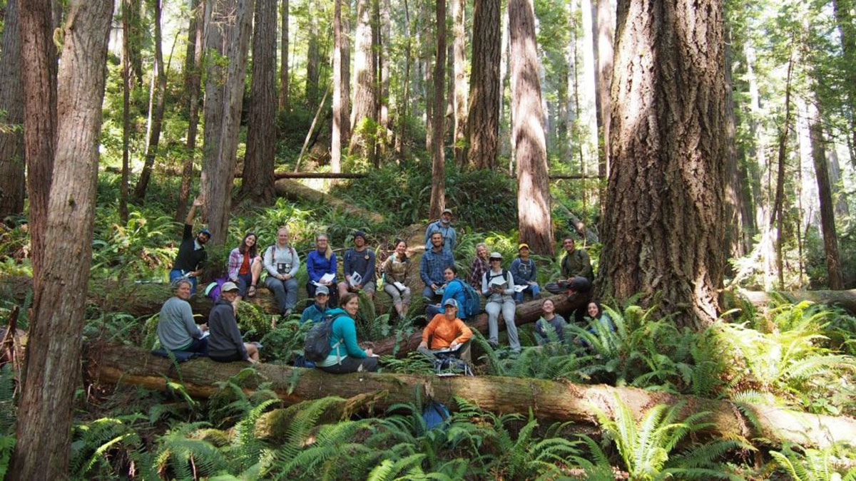 Student Cohort in Redwoods Environmental Education